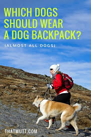 which dogs should wear a dog backpack almost all dogs