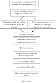 Pathophysiology Of Pyelonephritis In Flow Chart Urinary Tract Infection In Diabetics Intechopen