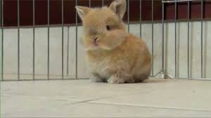 fluffy baby bunnies.  Fluffy Throughout Fluffy Baby Bunnies T