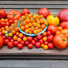 What Are The Different Types Of Tomatoes Bonnie Plants