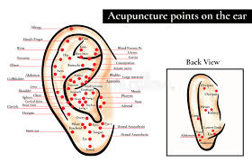 Reflex Zones On The Ear Acupuncture Points On The Ear Map