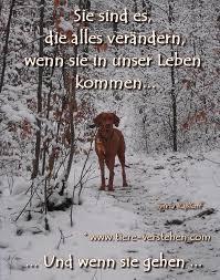 Der Beste Freund Hunde Sprüche Tierliebe Hundesprüche Und