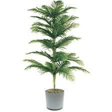 tall indoor plants best large indoor plants 1 island pine tall indoor plant stands uk