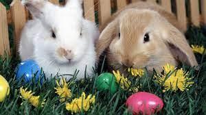 Easter Bunny Desktop Wallpapers ...