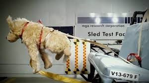 Pet owner alert Most restraints for pets in cars fail crash tests