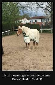 Jetzt Tragen Sogar Schon Pferde Eine Burka Danke Merkel Lustige