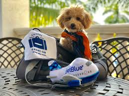 An accident and illness pet insurance policy costs $48.78 per month for a dog and $29.16 per month for a cat on average, according to the north american pet health insurance association (naphia). Traveling With Pets Jetblue