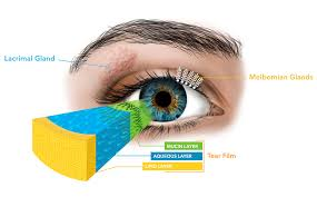 understanding mgd the leading cause of dry eye