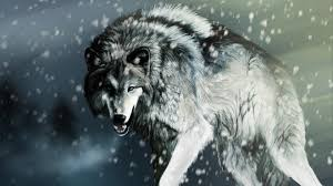 angry wolf wallpaper 1920x1080. Beautiful 1920x1080 Wolf HD Wallpapers  Inn With Angry Wallpaper 1920x1080 W
