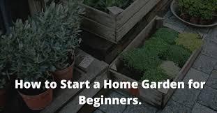 best home gardening tips for beginners