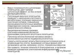 Презентация на тему Гепатит А Вирус гепатита А ВГА hav  5 Гепатиты