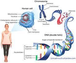 Qué es el ADN? | Ciencias Naturales