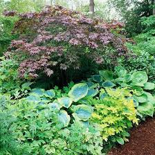 Small Picture 33 best Hostas images on Pinterest Shade plants Plants and