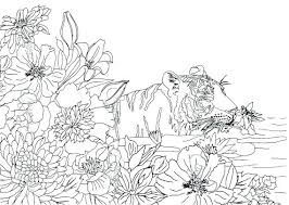 the beauties of nature coloring book with wild beauty colouring pages o