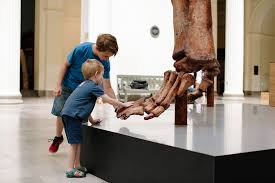 Maximo the Titanosaur   Field Museum