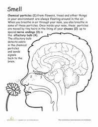 b51cc3315acea31b5ec1e8a1f2e382c1 nose diagram worksheet] file rhinoplasty nose diagram nasal on motion worksheet