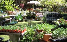 garden nurseries near me. Contemporary Near Plant Nursery Near Me Bamboo Best Of Home Design Ideas Garden  To Nurseries U