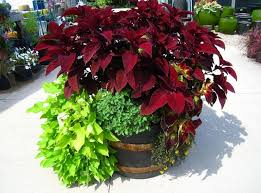 Small Picture Container Gardening Ideas Home design and Decorating