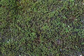 Grow Moss, a Natural Groundcover for Shady Places
