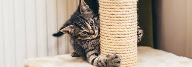 easy diy cat scratching post ideas