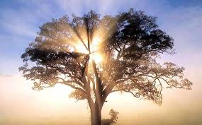 Resultado de imagen de El árbool de la vida