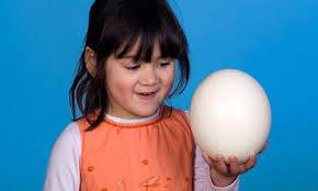 Image result for ostrich egg