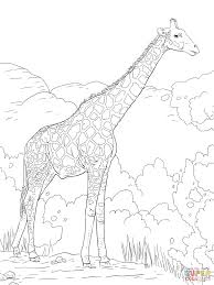 Small Picture Giraffe Eating Banana coloring page Free Printable Coloring Pages