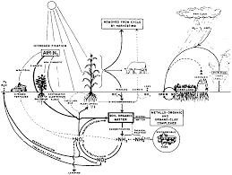 Potassium cycle diagram