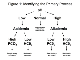 Arterial Blood Gas Primer Clinical Respiratory Diseases