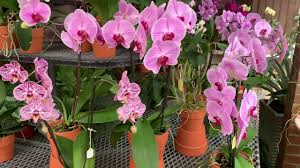 valentine s day gift ideas 2019 let s go ping orchids make great gifts
