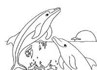 Small Picture Dolphin Coloring Pages Dolphin Facts and Information