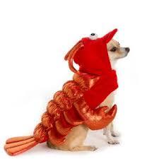 Null Dog Halloween Costumes Pet Halloween Costumes Pet