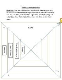 blank food chain pyramid. Brilliant Food Energy Pyramid Activity For Ecosystems Food Chains And Webs And Blank Chain A