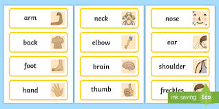 Body Part Chart For Toddlers Parts Of The Body Topic Word Cards Body Parts Body Parts