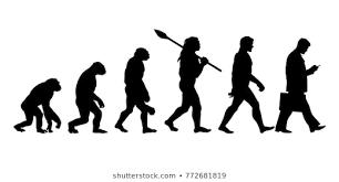 Ape Evolution Chart Human Evolution Images Stock Photos Vectors Shutterstock