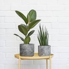 plant care plants pots 0 prev