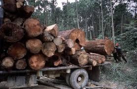 Illegal Logging World Wildlife Fund