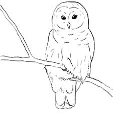 45 Snowy Owl Coloring Page Snowy Owl Pictures For Kids Az Coloring