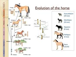As Biology Unit F212 Module 3 Biodiversity And Evolution
