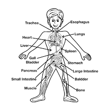 Small Picture Preschoolers Coloring Pages Of The Human Body With esonme