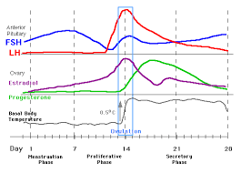 Period Cycle Pregnancy Chart Hormone Levels During Menstrual Cycle Pregnancy And Birth