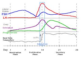 Estradiol Levels During Pregnancy Chart Hormone Levels During Menstrual Cycle Pregnancy And Birth