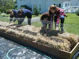 a master gardener grant last year funded a straw bale garden to help youth volunteers from several schools build beds while growing skills eggplant