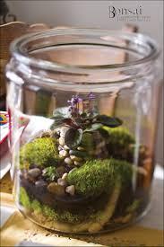 African Violet Terrarium