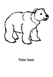 Small Picture Polar Bears Coloring Sheets For ToddlersBearsPrintable Coloring