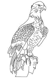 Small Picture Male Bald Eagle Coloring Page NetArt