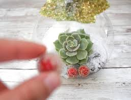DIY Christmas Ornaments with Live Succulents - Natalie Linda