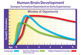 Brain Development And Synaptic Formation Chart The Science