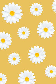 Yellow Daisy Wallpapers - Top Free ...