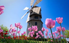 Small Picture Windmills house and a beautiful garden with pink flowers